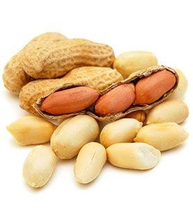 Peanut in Shell
